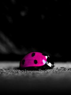 Pink Ladybird Mobile Wallpaper