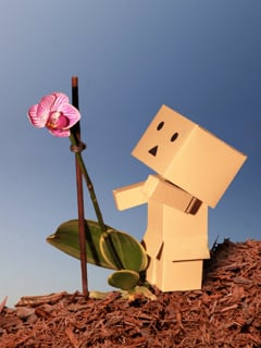 Danbo Mobile Wallpaper