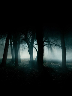 Dark Trees Mobile Wallpaper