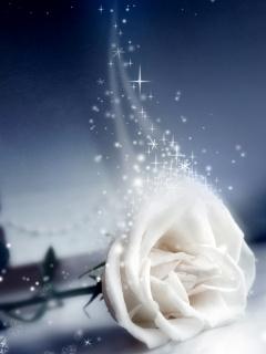 White Shine Rose Mobile Wallpaper