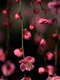 Pink Cute Flowers Mobile Wallpaper