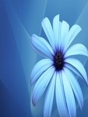 Blue Chamomile Mobile Wallpaper