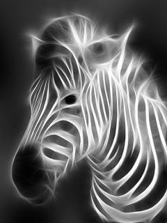 Zebra Black N White Mobile Wallpaper