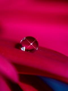 Pink Drop Mobile Wallpaper