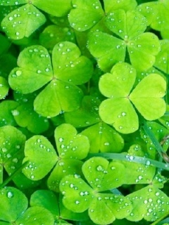 Irish Clovers Mobile Wallpaper