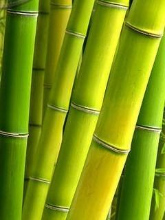 Green Nice Bamboo Mobile Wallpaper