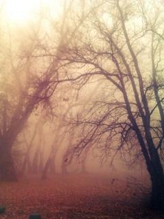 Fog Mobile Wallpaper