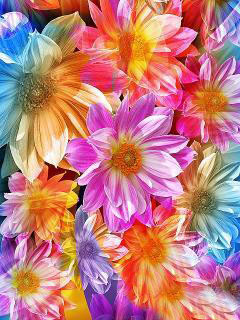 Carpet Of Flowers Mobile Wallpaper
