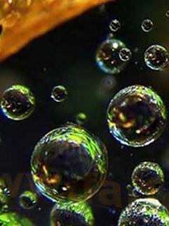 Amazing Bubbles Mobile Wallpaper