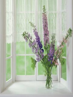 Flower Gifts Mobile Wallpaper