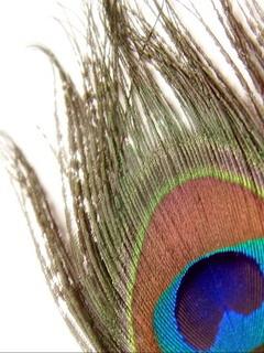 Peacock Wings Mobile Wallpaper