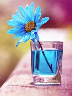 Flower On Blue Mobile Wallpaper