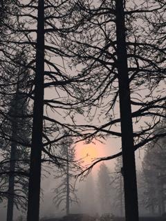 Sun Trees Mobile Wallpaper