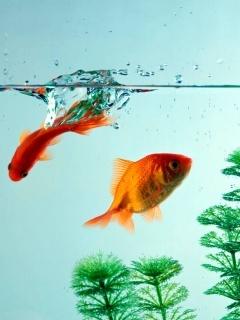 Fish Underwater Mobile Wallpaper