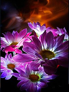 3d Nature Flower Mobile Wallpaper Toones