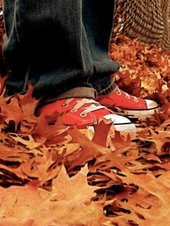 Orange Autumn Converse Mobile Wallpaper