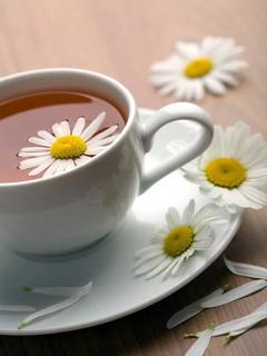 Chrysanthemum Tea Mobile Wallpaper
