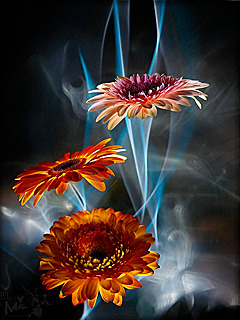 3D HD Flowers Mobile Wallpaper
