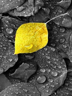 Yellow Wet Leaves Mobile Wallpaper