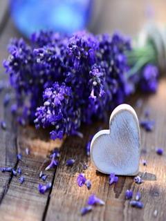 Lavender Love Mobile Wallpaper