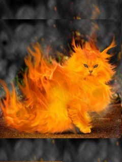 Fire Cat Mobile Wallpaper