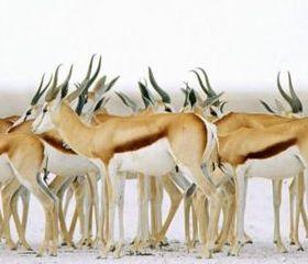Setosha Natinal Park Namibia Mobile Wallpaper