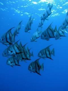 Fish In Water Mobile Wallpaper