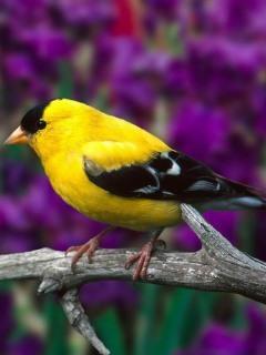 Yellow Animal Mobile Wallpaper