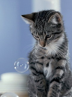 Cat Seeing Water Baloon Mobile Wallpaper