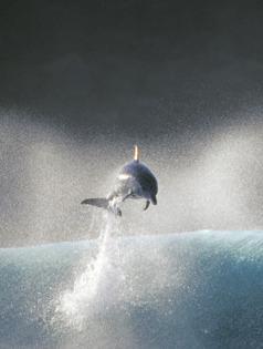 Jumping Fish Mobile Wallpaper