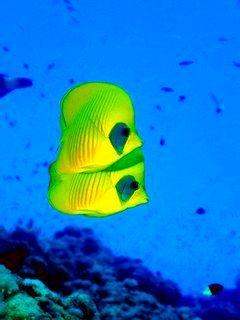 Colors Fish Mobile Wallpaper