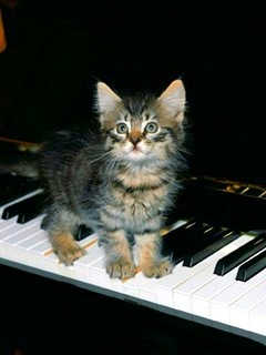Cat Stand ON Piano Mobile Wallpaper