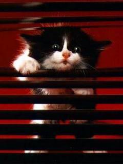 Cat Seeing Mobile Wallpaper