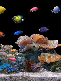 Aquarum-Spon Mobile Wallpaper