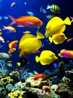 Best Fish Mobile Wallpaper