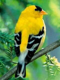 Bird - Yell Mobile Wallpaper