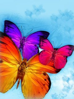 Butterfly 321 Mobile Wallpaper