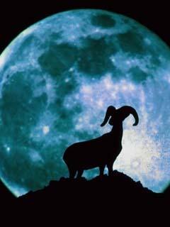Goat Mobile Wallpaper