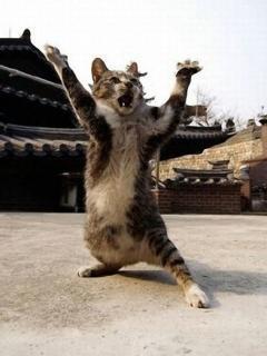 Kungfu Cat Mobile Wallpaper