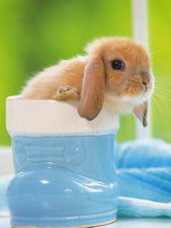 Rabbit Mobile Wallpaper