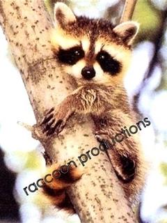 Raccoon Mobile Wallpaper
