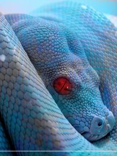 Snake Mobile Wallpaper