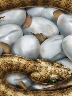 Snake Eggs Mobile Wallpaper
