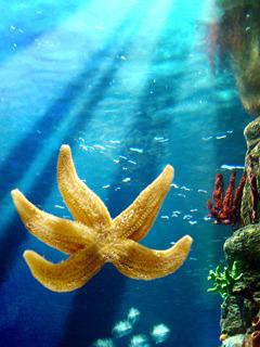 Star Fish2 Mobile Wallpaper