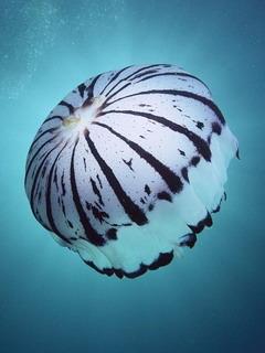 Undersea3 Mobile Wallpaper