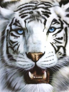 White Tiger  Mobile Wallpaper