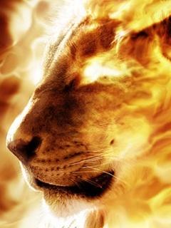 Lion Fire  Mobile Wallpaper