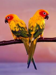 ColorfulBird Mobile Wallpaper