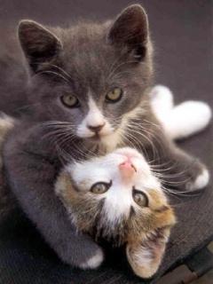 Cats Mobile Wallpaper