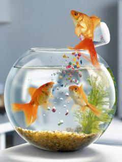 Aquarium Mobile Wallpaper